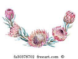 Freeart Fa9726956 Protea Art Protea Flower Wreath Illustration