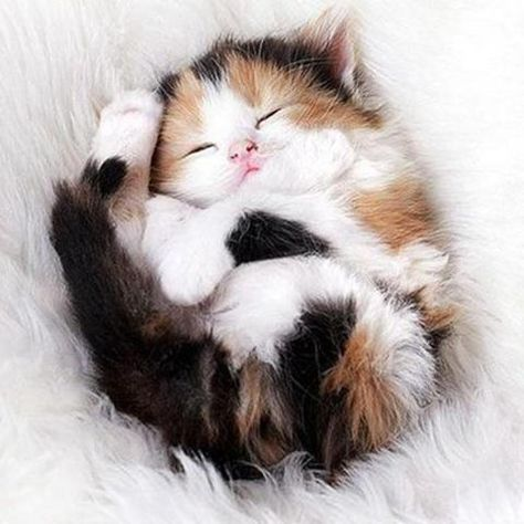 Cute Sleeping Kitten 5D DIY Paint By Diamond Kit