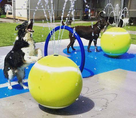Dog Splash Pad Splash Pad Dog Boarding Dog Park