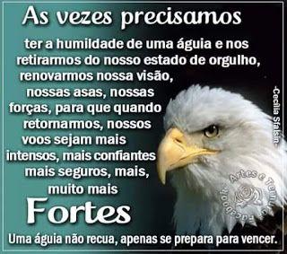 Fraterluz O Exemplo Das águias Frases De Motivação