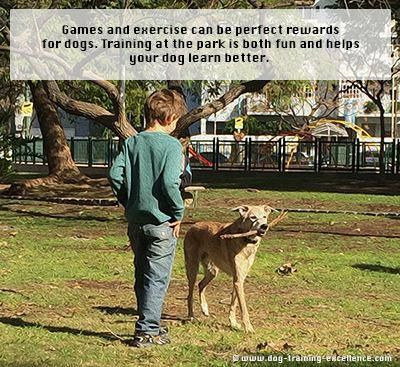 Non Food Rewards For Dogs Tips And Ideas Dog Training