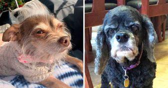 19 Perritos Cuyas Cejas Naturales Podrian Hacerte Decir Que Si A Todo Perros Mascotas Cejas Naturales