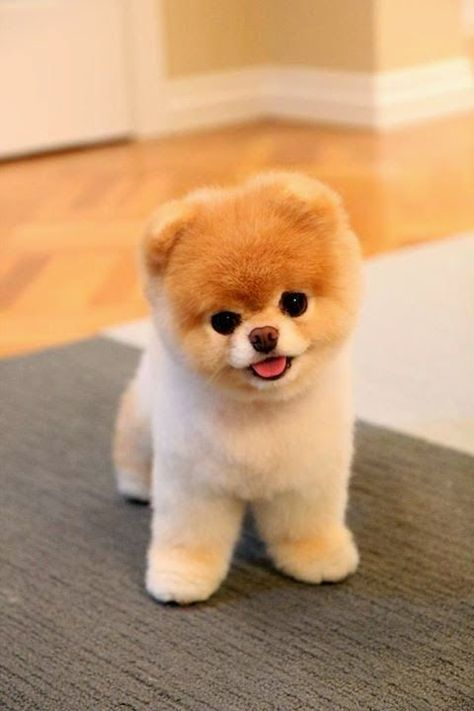 Puppies Always Help my name is kendalyn and i can take care of it. it looks very cute.if you like this messige just call me my numder is 2547336201.