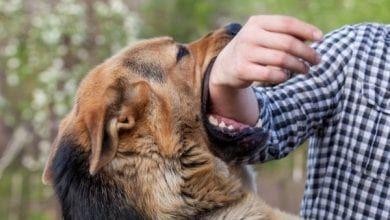 Pin By Mazen Saied On N 3rab Dog Biting Dog Urine Dogs