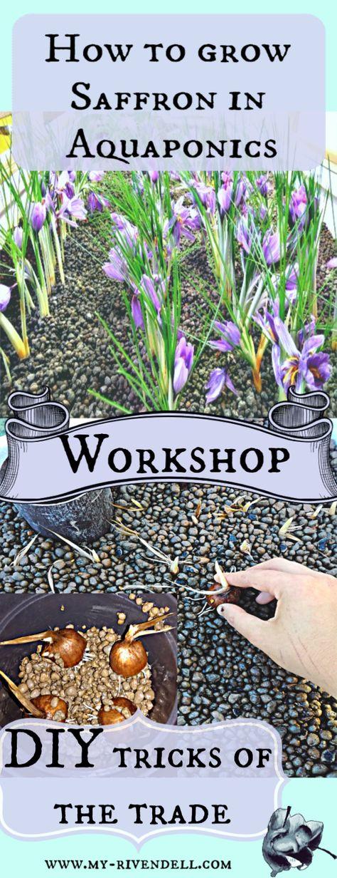 HD/_ 8Pcs Rare Saffron Bulbs Crocus Sativus Ball Flower Seeds Outdoor Garden Plan