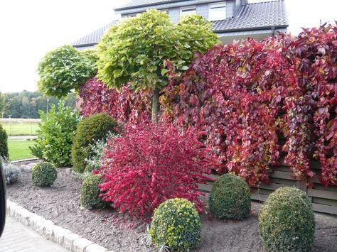 Gartenpflanzen  Weiterer Gartenpflanzen mit wunderschöner, leuchtend roter ...