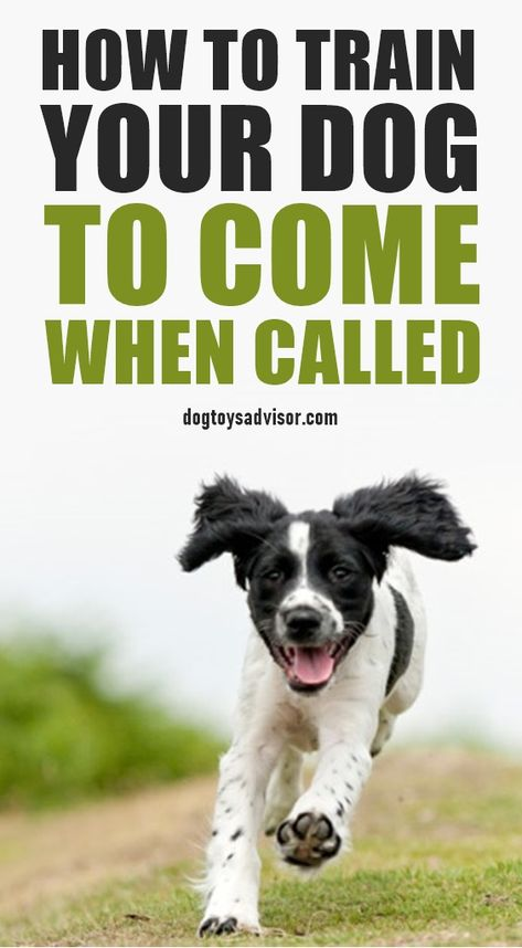 Does your dog come every time you call him? If not, here's how to train him  to do so with step by step instructions.   Training your dog, Dog training,  Dog brain