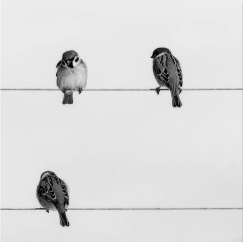 M As Tu Vu 21 Zsazsa Bellagio Tumblr Oiseau Noir