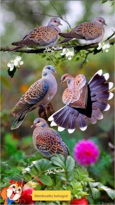 Download 870+ Foto Gambar Burung Burung Yang Cantik HD Paling Unik Gratis