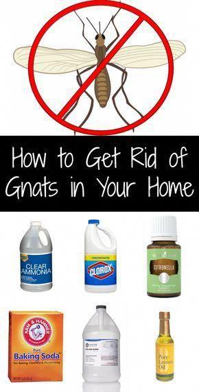 a00f13d3fb7b62948eeed6419e858dbe - How To Get Rid Of Gnats In A Home