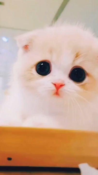 <3 #cuteanimals Gato video tierno???
