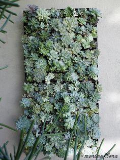 Succulent Vertical Garden Mural, by Merino Flora