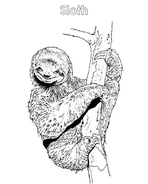 Image Result For Sloth Coloring Pages Animal Coloring Pages Baby Sloth Coloring Pages