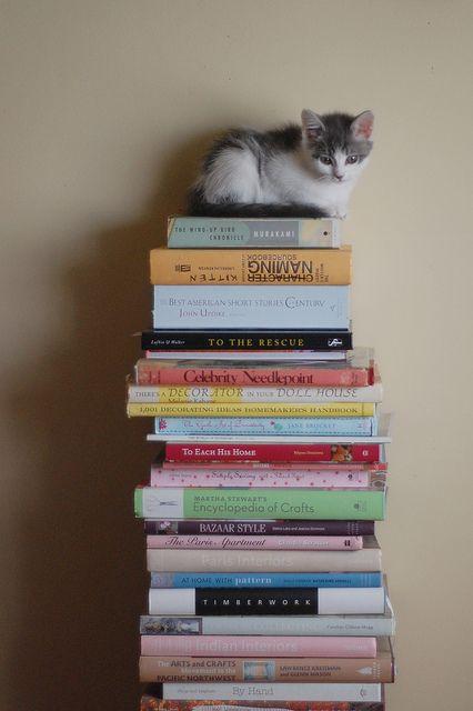 books & a kitten
