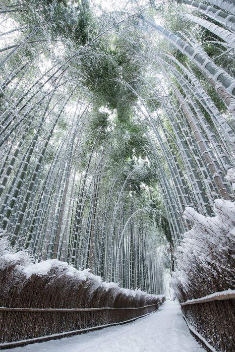 японский лес зимой фото целом, ситуация больницах