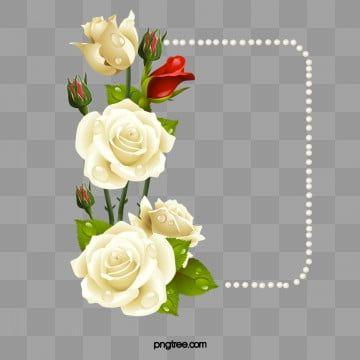 الورود البيضاء مع بطاقة اللؤلؤ الورود البيضاء بطاقات إبداعية روز حدود Png وملف Psd للتحميل مجانا White Rose Flower Golden Wedding Anniversary Card White Roses