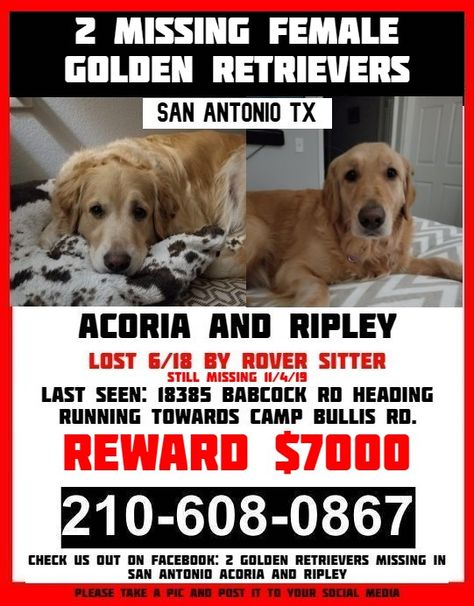 7000 Reward For 2 Missing Female Golden Retrievers They Were