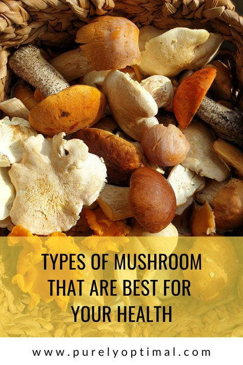 We've listed the A-lister mushrooms that give outstanding nutritional health benefits in this blog. Find out how you can get 'em all! #mushrooms #mushroombenefitshealth #mushroombenefitsnutrition #reishimushroom #chagamushroombenefits #shitakemushrooms #lionsmanemushroom