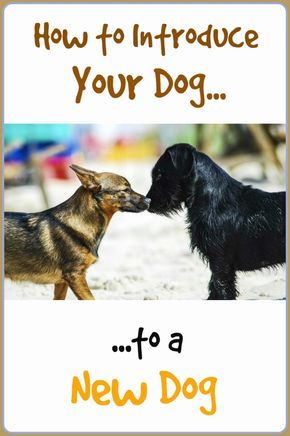 Dog Training Obedience Classes Are A Great Option If You Feel
