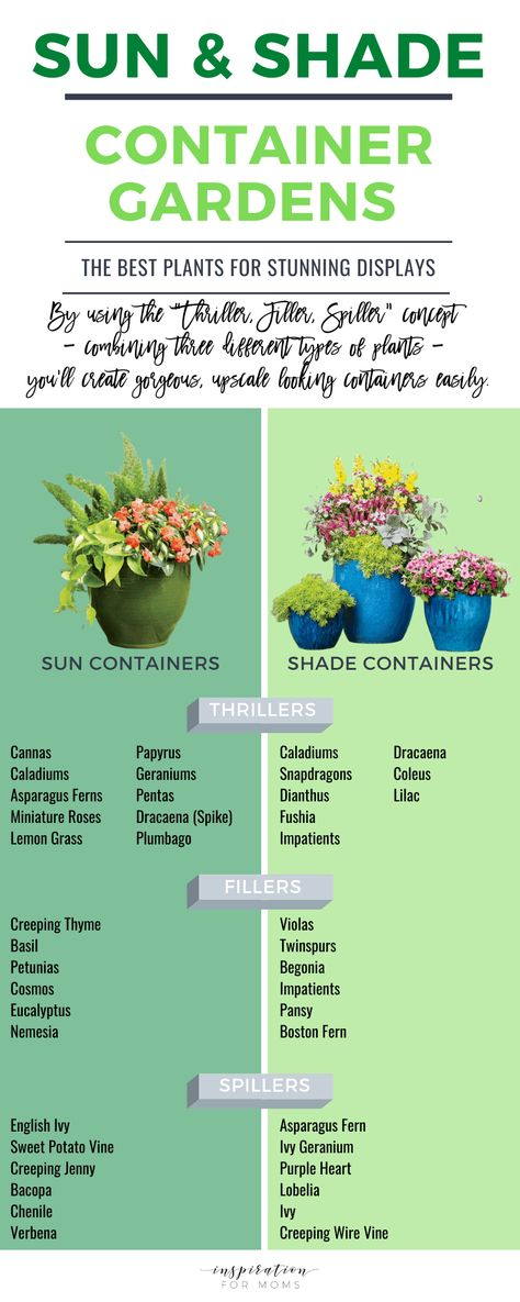 Sun and Shade Container Garden Ideas - Inspiration For Moms