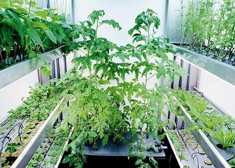 Hydroponics Is A Division Of Hydro Culture And Is A Technique Of Growing  Plants Using Mineral Nutrients In Water, Without Soil. Max Grow Shop Offers  Wide ...