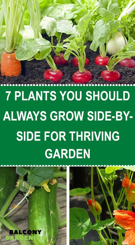 Growing Veggies, Growing Plants, Gardening For Beginners, Gardening Tips, Companion Gardening, Vegetable Garden Design, Vegetable Gardening, Edible Garden, Fruit Garden