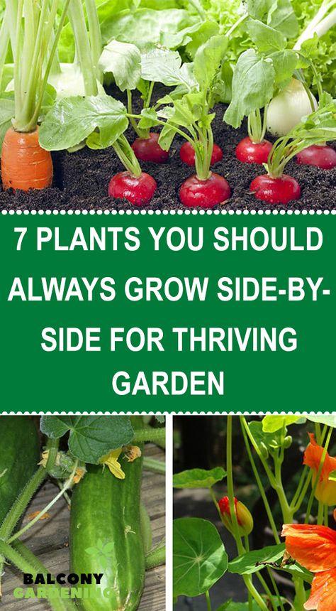 Companion Gardening, Gardening Tips, Growing Veggies, Growing Plants, Vegetable Garden Design, Edible Garden, Plant Care, Garden Inspiration, Garden Ideas