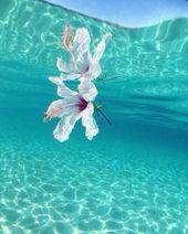 Blume von unter Wasser - Valentin Fabian Münch - #Blume #Fabian #Münch #unter ... -  - #Blume #Fabian #Münch #unter #Valentin #von #Wasser