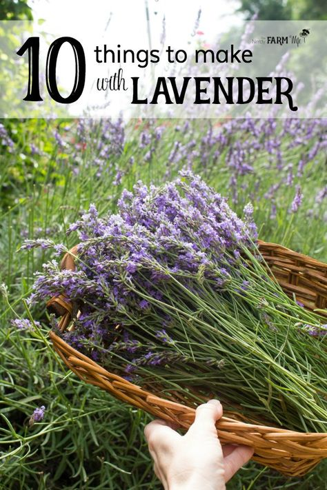 10 Things to Make With Lavender - Have a bountiful crop of lavender from your garden, local farmer's market or a trip to a lavender farm, but not sure what to do with it? Here are 10 useful and pretty things that you can make with that beautiful lavender Beauty Secrets, Beauty Hacks, Beauty Tips, Beauty Care, Diy Beauty, Lavender Crafts, Growing Lavender, Uses For Lavender Plant, Lavender Plant Care