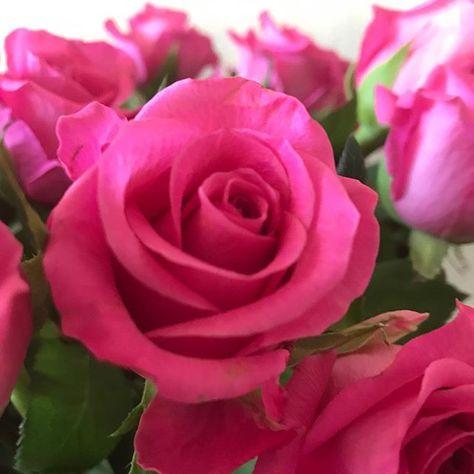 elkedageenfoto R -> Roze rozen #something...