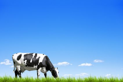 Kuh Lebensgross Coole Garten Deko Tiere Deko Und Kuh