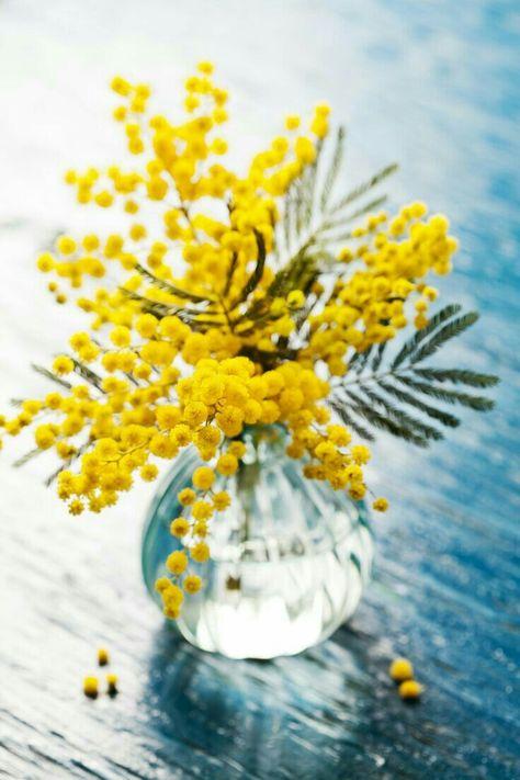 Fiori Gialli Vaso.Immagine Fiori Gialli Di Licia Juvenis Su Vasi Di Fiori Vaso