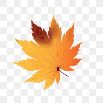 Autumn Leaves Design Element Decorative Pattern Ai Hand Drawn Maple Leaf Autumn Leaves Design Element Decorative Pattern Png And Vector With Transparent Back In 2020 Background Patterns Design Elements Leaf Design