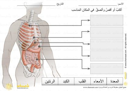 وضع المسميات على الرسم أعضاء جسم الانسان الداخلية قراءة كلمات مطبوعات علمية للصغار Body Anatomy Anatomy Omar