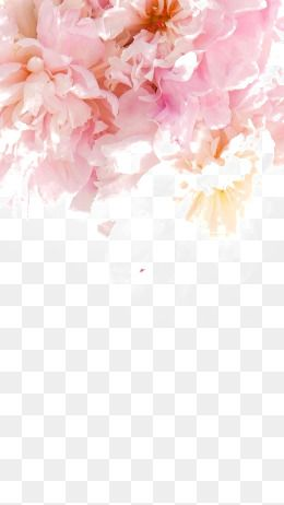 Pink Peony Creative Peony Pink Flowers Large Flowers Png