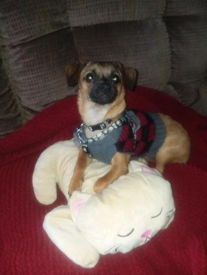 Summer Dog Dress Poodle Bichon Corgi Pug Clothes French Bulldog
