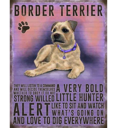 Border Terrier Graphic Art Print On Metal Original Metal Signs Co Size 40cm H X 30cm W Border Terrier Terrier Dogs Terrier