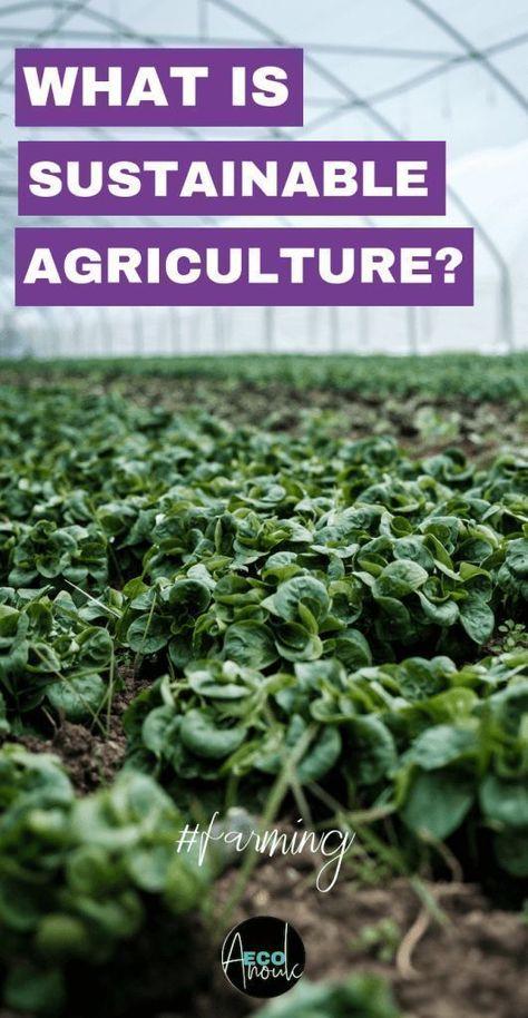 Can We Fix Topsoil Through Regenerative Agriculture?   Eco Anouk