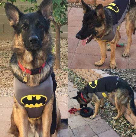If You Need A Hero How About An Awesome Dog Pet Costumes For