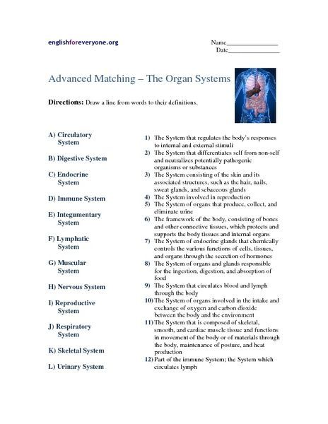 Body System Worksheet Answers Worksheets Are An Important Portion Of Gaining Knowledge Of English Li In 2021 Human Body Systems Body Systems Body Systems Worksheets