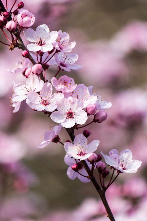 Frühlingsgefühle II von Sarah Verkaik   Flowers and Such