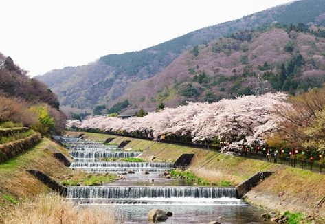 Sakura Japan Guide To Enjoy The Cherry Blossom Festival Spring 2021