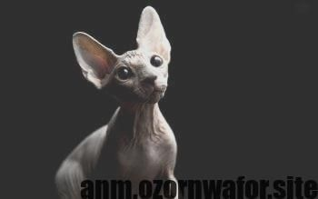 New Snap Shots Siamese Cats Hairless Tips Siamese Cats And Kittens Work Best Re Cats New Snap Shots Siamese Cats Hairles Cats Kittens Cat Aesthetic Sphynx Cat