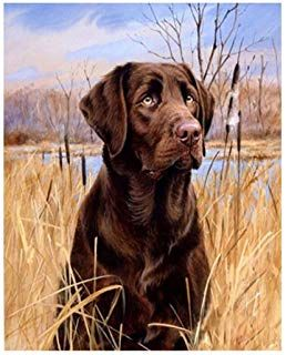 Lanment Painting By Number Labrador Dog Drawing Diy Paint By Number Kits For Adults Beginners Kids Teens Drawing With Dog Paintings Labrador Art Labrador Dog