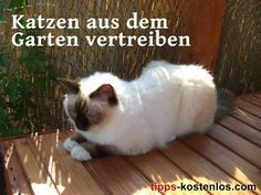 Katzen Vertreiben Aus Dem Garten 5 Tipps Die Helfen Katzen Vertreiben Garten