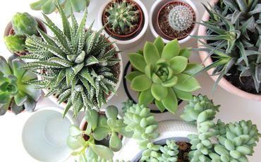 Les Plantes Grasses D Interieur Plantes Grasses Plante