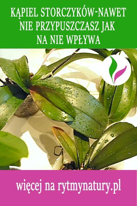Kapiel Storczykow Nawet Nie Przypuszczasz Jak Na Nie Wplywa Plant Leaves Herbs Plants