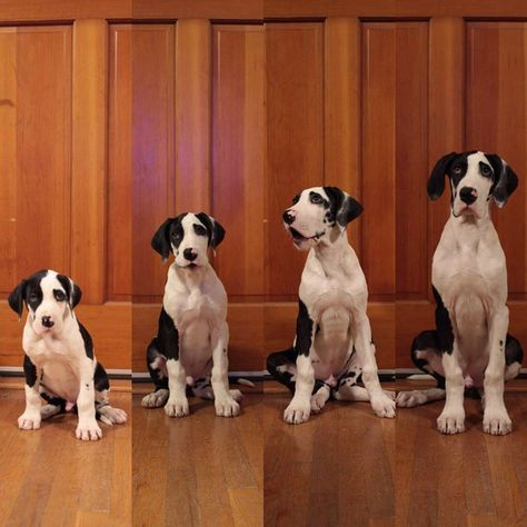 Just 8 Weeks From Left To Right Cutest Animals Funny Animal