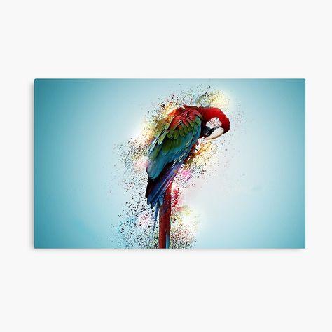 #parrot #parrotcare