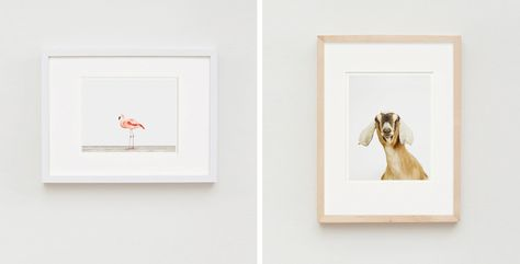 Ready Made Frame Option For Small 7 X 9 Print Ikea Ribba Frame In 12 X 16 With 8 X 10 Opening Matte The Matt Ikea Ribba Frames Animal Print